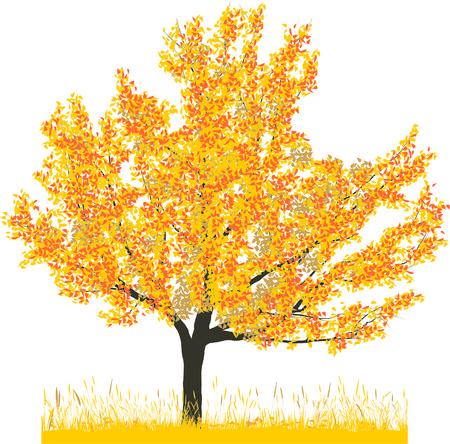 Vector illustration of cherry tree in autumn Vector