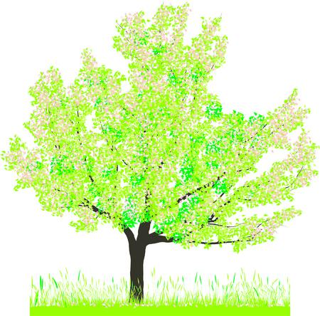 zeitlos: Vektor-Illustration der Kirschenbaum im Fr�hjahr
