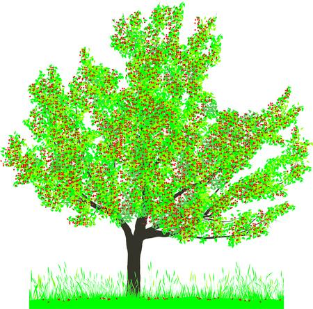 zeitlos: Vector Illustration of Cherry Tree im Sommer