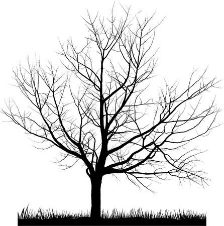 shrubs: Vector illustration of cherry tree in winter