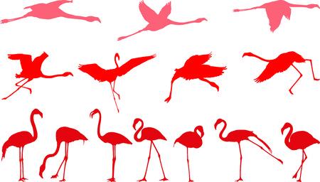 flamingi: Złożony ilustracji wektorowych z ptaków, pink flamingos Ilustracja