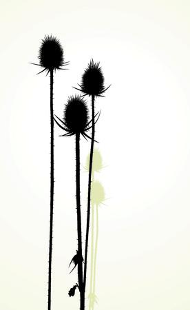 distel: Abbildung Silhouette der Distel Illustration