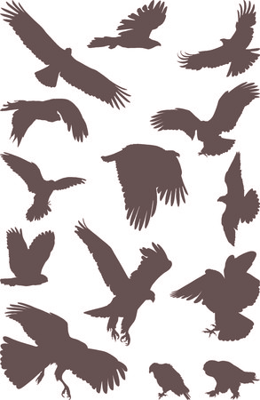 isolated silhouettes of bird predator on the white background Vector Illustration