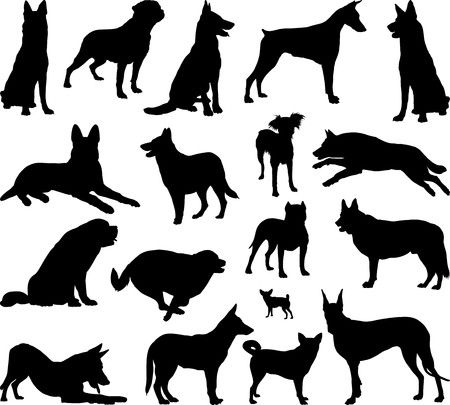 Illustration of dog breeds