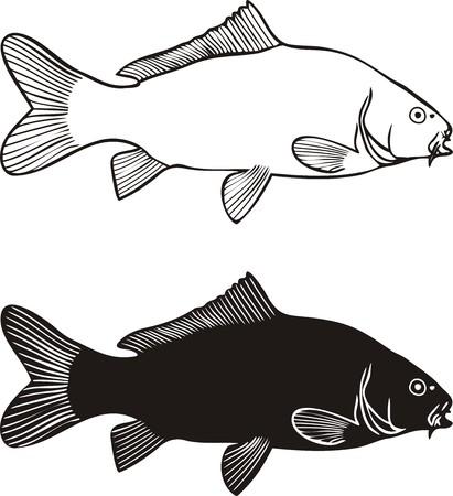carp fishing: Bianco e nero illustrazione carpa, isolato  Vettoriali