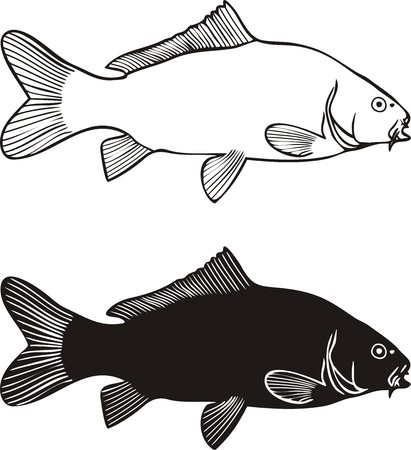 carp fishing: Black and white illustration carp, isolated Illustration