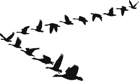 migrating animal: Black and white illustration in the form of flying geese units