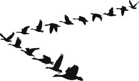 Ilustración de blanco y negro en forma de volar unidades de gansos