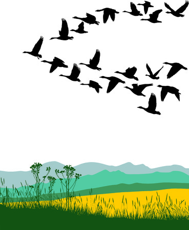 waterfowl: Color illustration of the flying geese