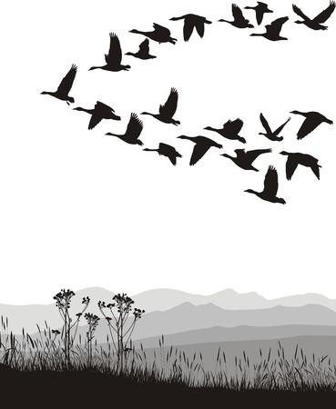 gansos: Ilustraci�n de blanco y negro de los gansos volando