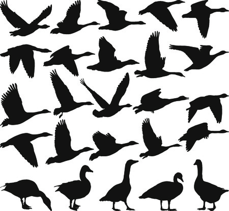 flock of birds: Silhouette geese, black and white vector illustration