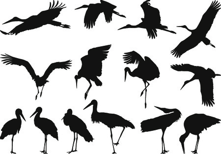 migrating animal: Collection of silhouettes on white storks