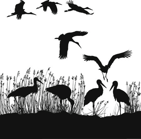 lakeside: black and white illustration of storks on the lakeside