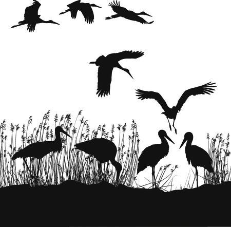 migrating: black and white illustration of storks on the lakeside