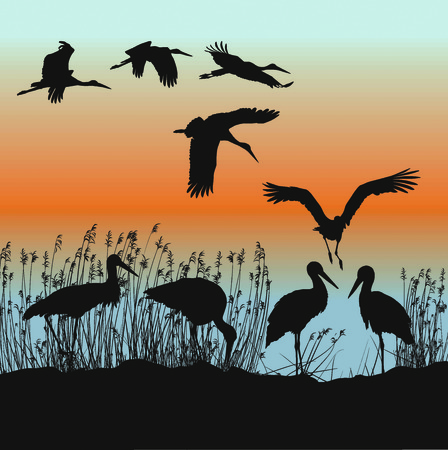 illustration of storks on the lakeside
