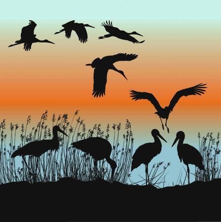 wader: illustration of storks on the lakeside