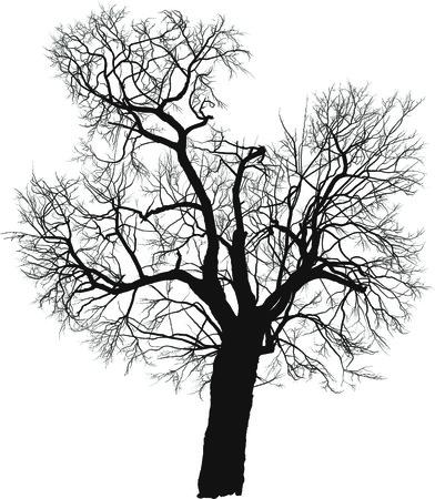 落葉性の木のシルエット桑