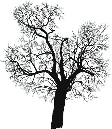 tree in field: silhouette of a deciduous tree, mulberry