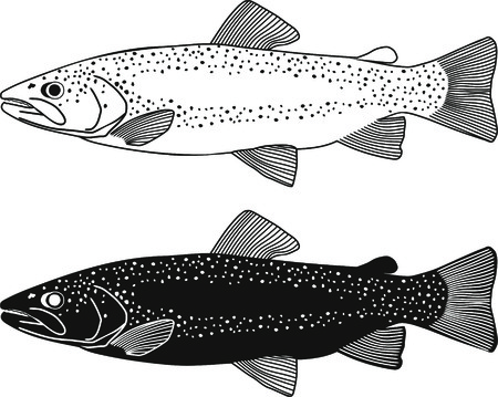 fish fly black illustration wildlife trout fishing Vector