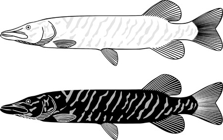 Black and white illustration of a pike Ilustracja