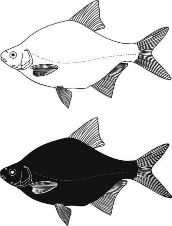 Black and white illustration Freshwater fish - bream Stock Vector - 7679927