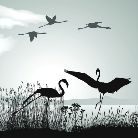 birds lake:  illustration silhouettes black birds in nature