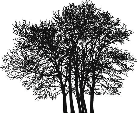 silhouette contour:  illustration of the deciduous trees