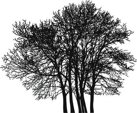 deciduous tree: Ilustraci�n de los �rboles de hoja caduca  Vectores