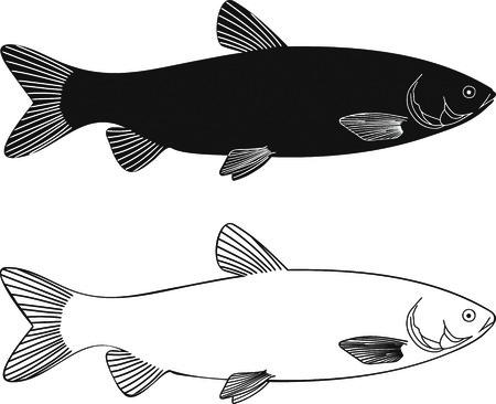 illustration black and white freshwater white Grass carp Stock Vector - 7925524