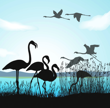lake shore:  illustration silhouettes flamingo in nature