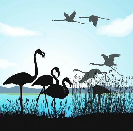 aquatic bird:  illustration silhouettes flamingo in nature