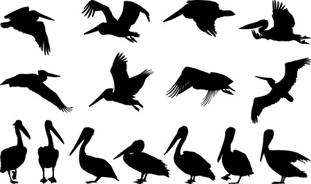 pelican: Collection of vector silhouettes on white storks Illustration