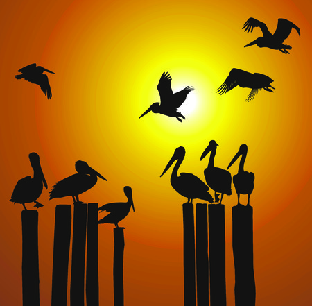 sunsets: Pelicans of the pillars of the old pier Illustration