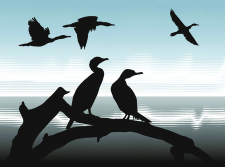 illustration silhouettes Cormorants in nature Stock Vector - 8348235