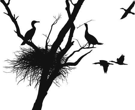 birds nest: anidan cormoranes de ilustraci�n en el �rbol seco