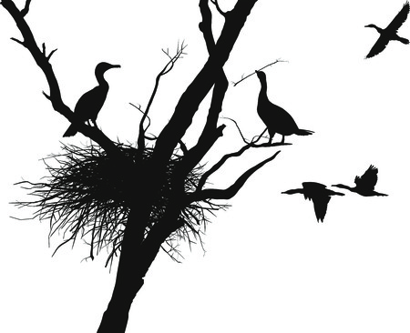 illustration cormorants nest in the dry tree