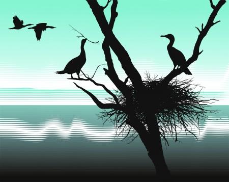 albero secco: illustrazione nido cormorani nel albero secco