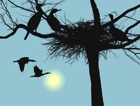 birds lake: vector illustration cormorants nest in the dry tree