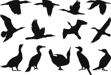 Collection of vector silhouettes on Cormorant Stock Vector - 8427908