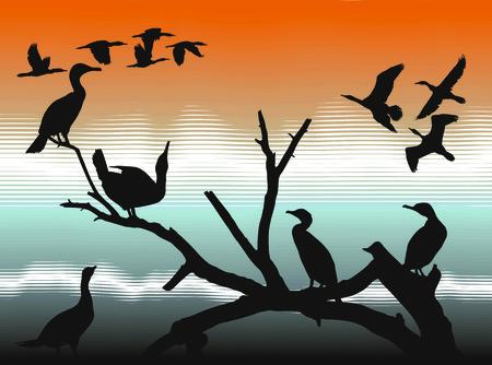 aquatic bird: Illustration of the cormorants on the river Illustration