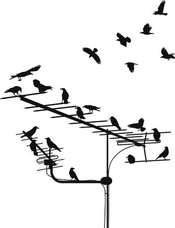 антенны: black silhouettes of the crows on the television antenna