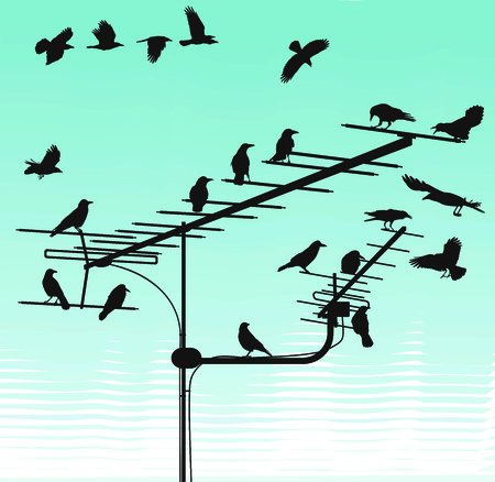 black silhouettes of the crows on the television aerials