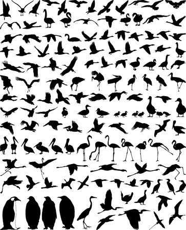waterfowl: birds in the water and eat fish, vector illustration