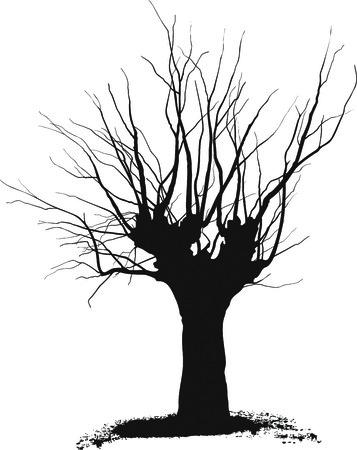 Albero di acacia silhouette disegni neri su sfondo bianco