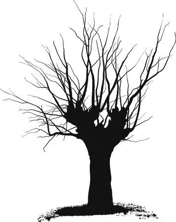 pruning: Silhouette acacia tree black drawings on a white background