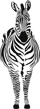 Zebra Stock Vector - 9440785