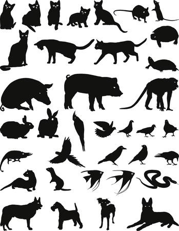 野生および国内の動物飼育  イラスト・ベクター素材
