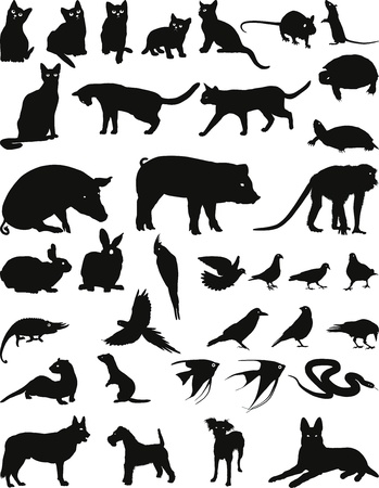 Wild and domestic animals kept at home Illustration