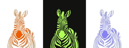 Zebra Stock Vector - 9440784