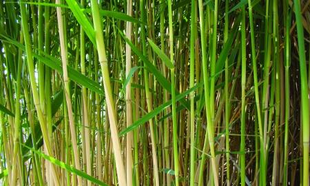 vod: detail a zelené stonky suché tŕstie                                 Stock Photo